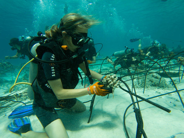 PIYOGA helps rebuild the coral reef in Bali in collaboration with the Gili Eco Trust in Bali, Indonesia