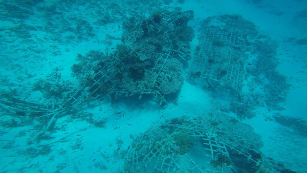 The Biorock after 8 months. PIYOGA ocean conservation. Save the sea turtles