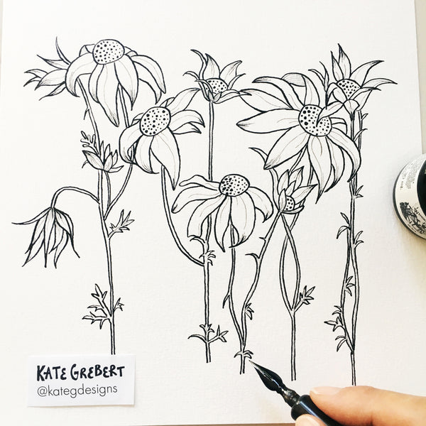 Botanical Art Print - Flannel Flowers - Botanical Wall Art - Kate Grebert Designs