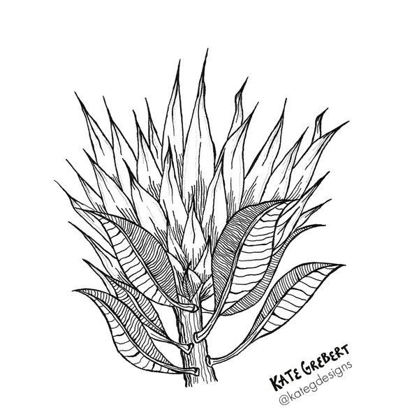 Botanical Art Print - Protea Head - Monochrome Wall Art - Kate Grebert Designs