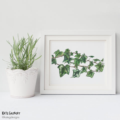 Botanical Art Print - Trailing Ivy - Wall Art - Kate Grebert Designs
