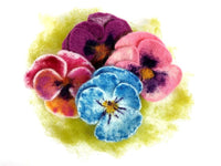 Pansy Flowers Pack - makes 10-12 pretty pansy flowers - no tools!