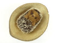 Coconut Shell - available individually or in pack of 5