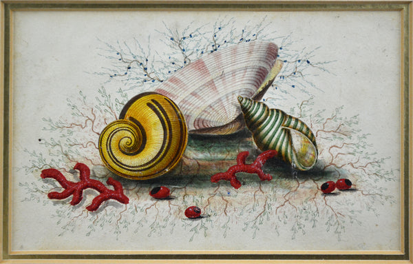 19th Century Watercolour - Study of Seashells