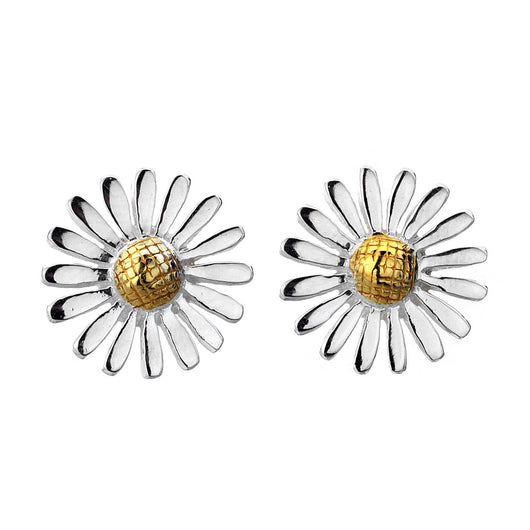 Photo of Flowering daisy studs