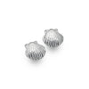 Photo of Baby scallop shell studs