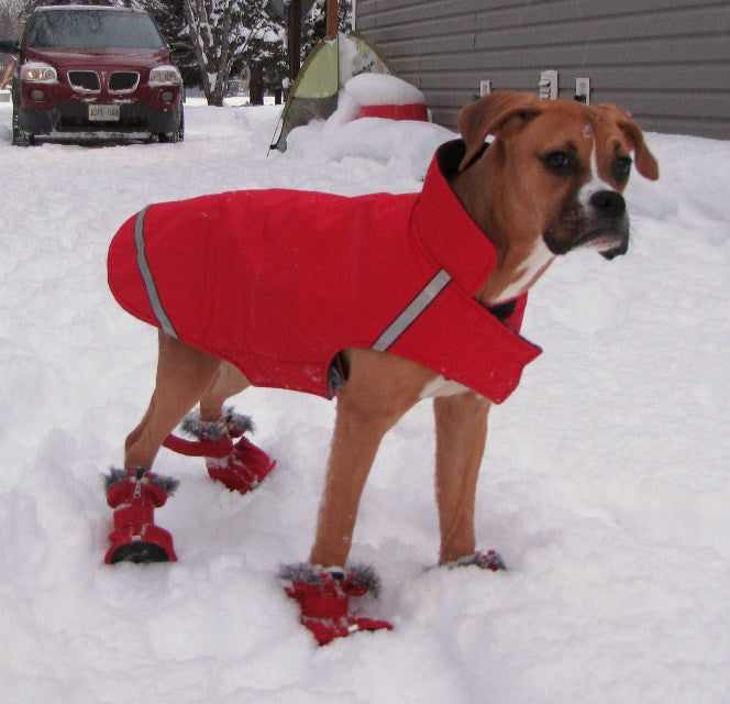 5 Tips for Winterizing Your Dog