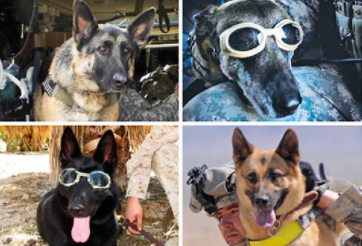 Four Legged Heroes