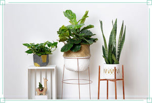 3 Simple DIY Plant Stands