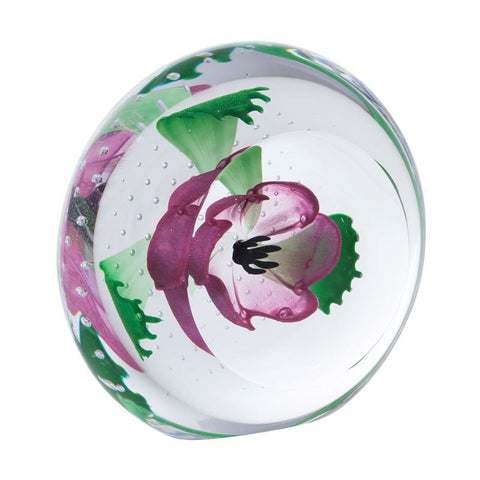 Caithness Glass Limited Edition Pink Anemone Windflowers Paperweight