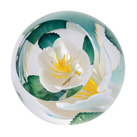 Caithness Glass Limited Edition Wild Rose Of Scotland Paperweight