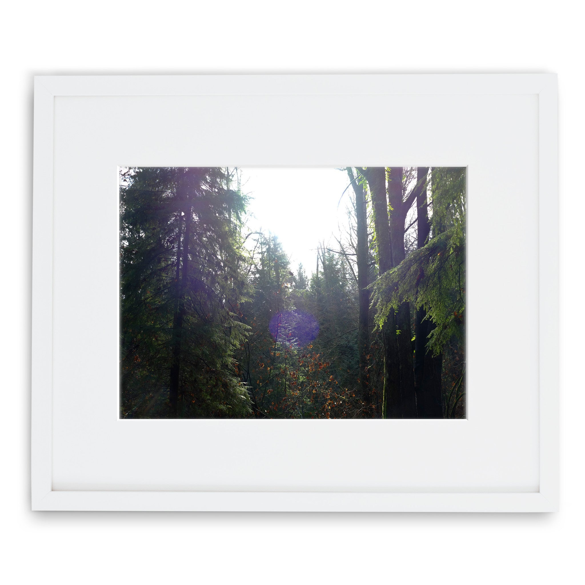 Jessie Chaney Prints - Enchanted Forest
