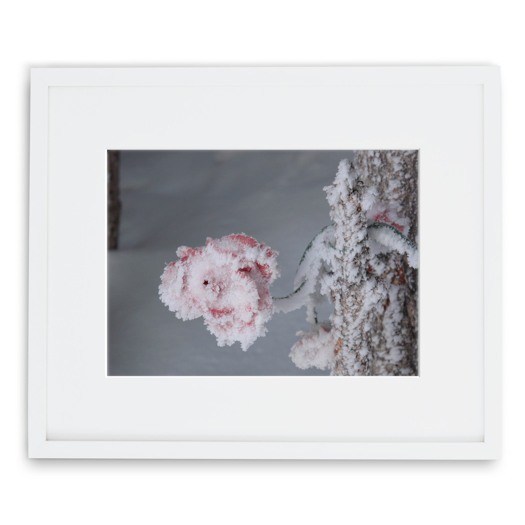 Jessie Chaney Prints - Frozen Rose