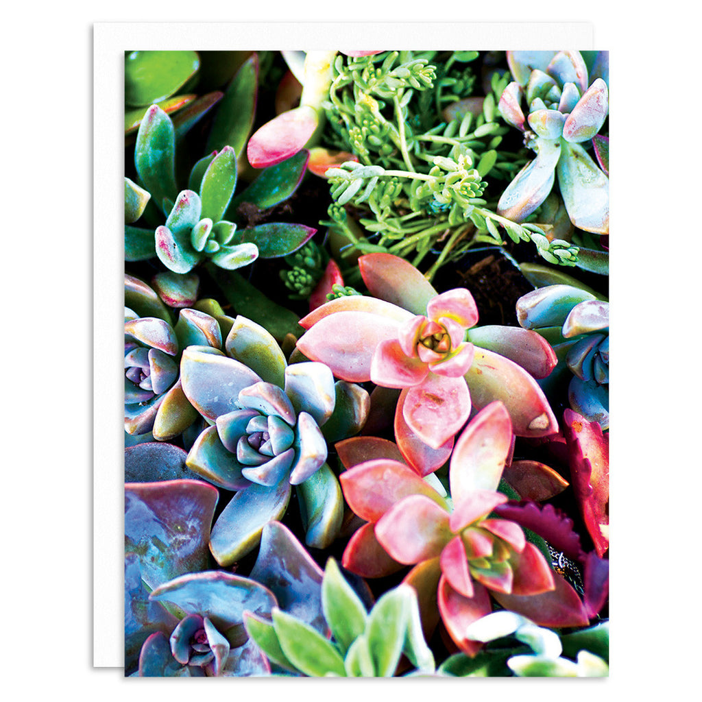 Succulent Dreams Greeting Card Set