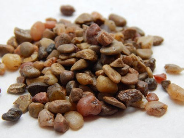 Mini River Pebbles in Earth Tones for Terrariums, Craft, Weddings and More - Bliss Gardens