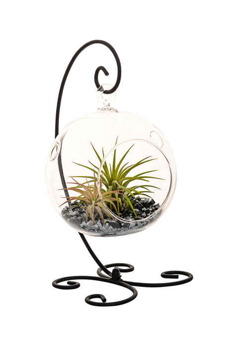 Air Plant Terrarium with Black and Silver Rocks and Black Metal Stand - Bliss Gardens