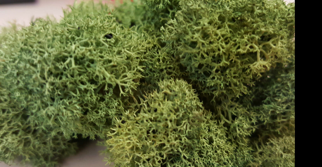 Terrarium Moss Choose Your Color - Bliss Gardens