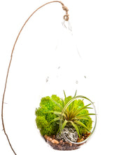 Bliss Gardens Air Plant Terrarium  / Moss and Geode / Green Goddess - Bliss Gardens