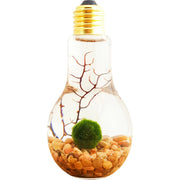 Bliss Gardens Marimo Moss Ball Light Bulb Water Terrarium - Bliss Gardens