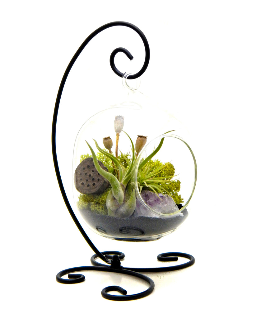 "Bliss Gardens Air Plant Terrarium Kit Midnight Forest / 6"" Oval Glass - Bliss Gardens"