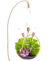 Bliss Gardens Air Plant Terrarium  / Midnight Forest