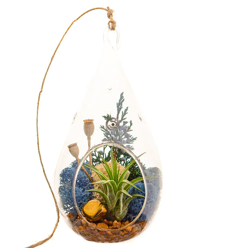Bliss Gardens Air Plant Terrarium / Juniper Forest - Bliss Gardens