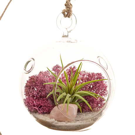 Bliss Gardens Mini Air Plant Terrarium Kit / Pink Moss / White Sand / Rose Quartz - Bliss Gardens