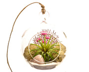 Bliss Gardens Air Plant Terrarium W/ Rose Quartz / Pretty Pink Countryside
