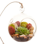 Succulent Terrarium with Moss and River Rocks - Bliss Gardens