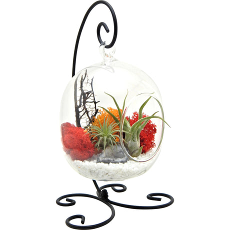 "Bliss Gardens Air Plant Terrarium Kit with 6"" Oval Glass / Geode Crystal/ Sunburst On Ice / Small Black Metal Stand Included - Bliss Gardens"