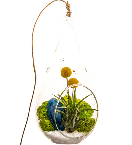 Bliss Gardens Air Plant Terrarium Kit  / Blue Agate / Surf's Up - Bliss Gardens