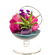 "Bliss Gardens Air Plant Terrarium / 4"" Round Glass Pedestal Stand - Bliss Gardens"