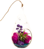 "Air Plant Terrarium with Purple Agate / 7"" Teardrop Glass / Turquoise Passion - Bliss Gardens"