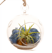 Mini Air Plant Terrarium with Blue Moss, Sand and Tiger's Eye / Round or Teardrop - Bliss Gardens