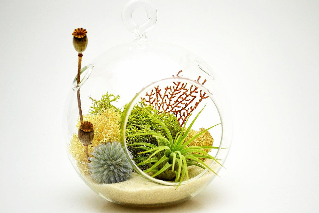 "Air Plant Terrarium Kit with Sea Fan, Moss, Dried Flowers / 4"" Round Glass / Nautical Countryside"