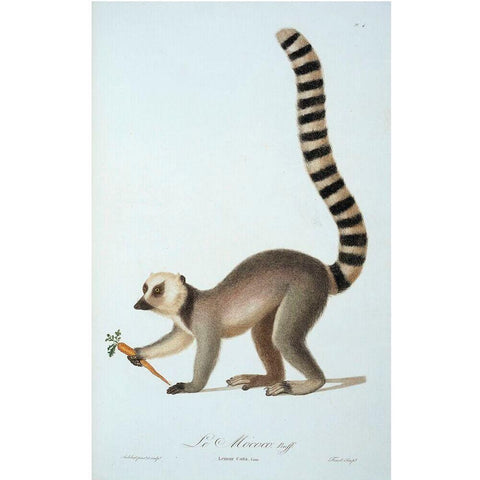 Mural Ring Tailed Lemur Small - IXXI-depto-51.myshopify.com