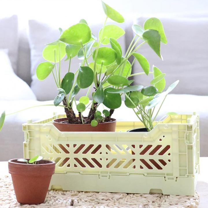 Caja Organizadora Plegable Mini Lime Cream AY-KASA- Depto51