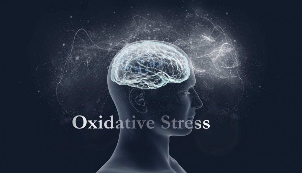 Cellular Aging & Oxidative Stress