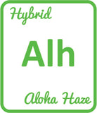 Buy Cannabis Terpene Profile Aloha Haze