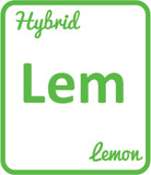 Buy Cannabis Terpene Profile Lemon