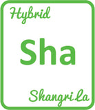 Buy Cannabis Terpene Profile Shangri La