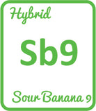 Buy Cannabis Terpene Profile Sour Banana 9
