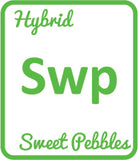 Buy Cannabis Terpene Profile Sweet Pebbles