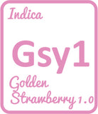 Buy Cannabis Terpene Profile Golden Strawberry 1.0