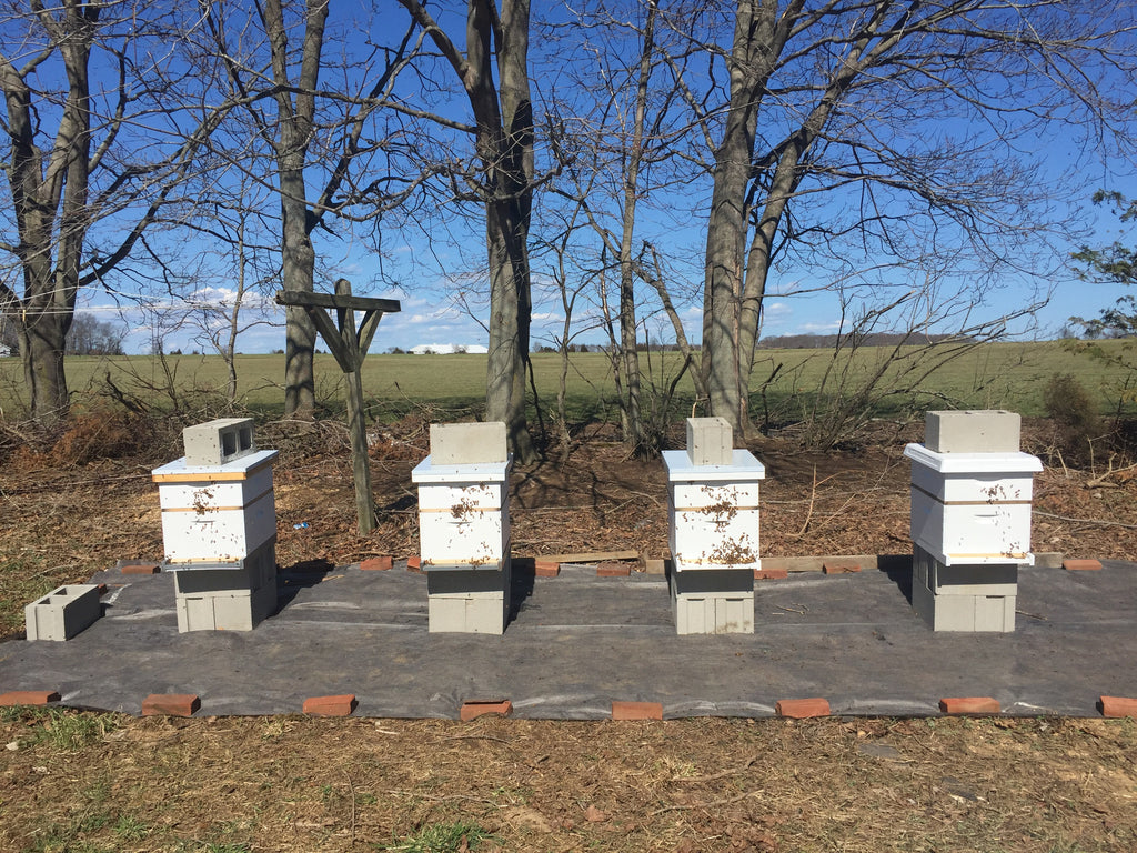 Spring has sprung, healthy new hives