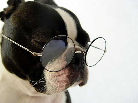Black and white bulldog wearing round metal framed glasses