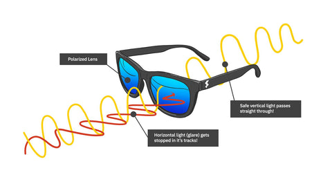 A cross section diagram labels the parts of a polarized lens