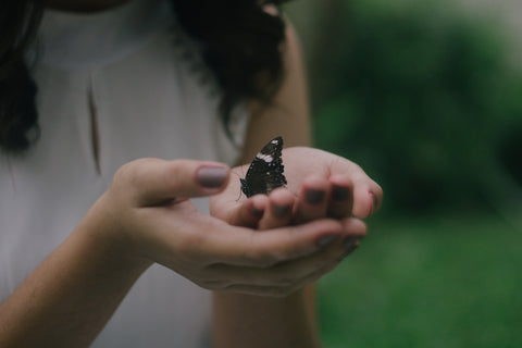 Woman's hands holding butterfly during dusk