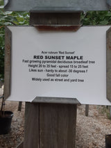 Maple Red Sunset 15-gal