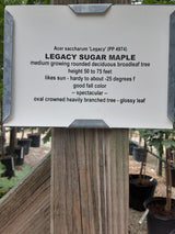 Maple Legacy Sugar 15-gal